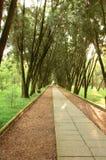 strada del pedone della foresta Fotografia Stock
