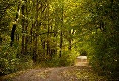Strada del sentiero nel bosco Immagini Stock Libere da Diritti