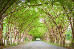 Strada del tunnel dell'albero fotografia stock