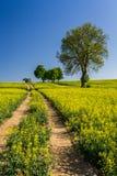 Strada del villaggio fra il campo del colza oleifero Fotografia Stock