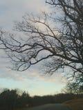 Strada dell'albero fotografie stock libere da diritti