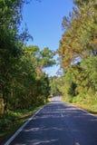 Strada dell'albero Fotografie Stock