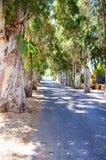 Strada dell'albero del tunnel Vecchi alberi di betulla Immagini Stock Libere da Diritti