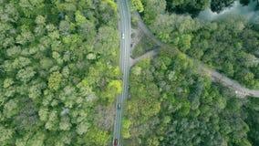 Strada dell'automobile della foresta