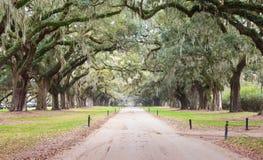 Strada dell'entrata a Boone Plantation Charleston South Fotografia Stock Libera da Diritti