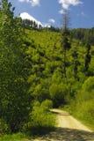 Strada dell'insenatura del pino Fotografia Stock Libera da Diritti
