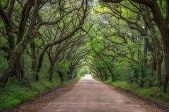 Strada della baia di botanica in Carolina del Sud Immagine Stock