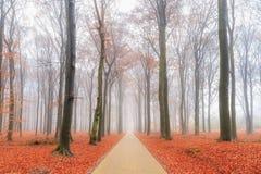 Strada della bici in autunno fotografie stock libere da diritti
