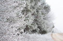 Strada della campagna con i rami di pini congelati Immagini Stock Libere da Diritti