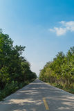 Strada della campagna con la vista della foresta Fotografie Stock Libere da Diritti