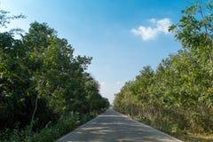 Strada della campagna con la vista della foresta Fotografie Stock