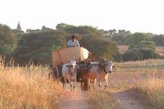 Strada della campagna di Bagan Immagini Stock Libere da Diritti