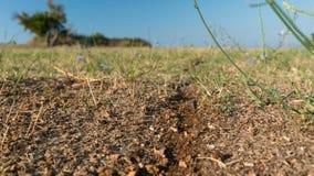 Strada della formica al formicaio video d archivio