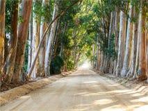 Strada della ghiaia allineata albero fotografia stock