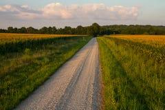 Strada della ghiaia con i campi di mais fotografie stock libere da diritti
