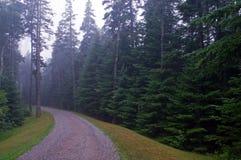 Strada della ghiaia nella foresta del pino Fotografia Stock
