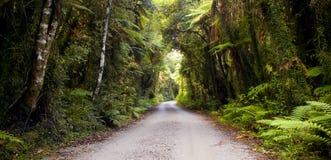 Strada della giungla Fotografie Stock