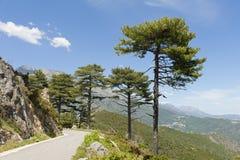 Strada della montagna in Corsica centrale, Francia Fotografia Stock