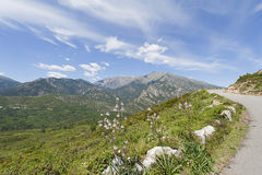 Strada della montagna in Corsica, Francia Fotografie Stock