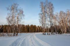 Strada della neve della foresta di inverno Fotografie Stock