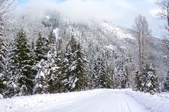 Strada della neve di Snoqualmie Fotografia Stock