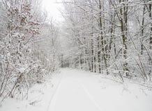 Strada della neve nella foresta di inverno dopo le precipitazioni nevose Fotografia Stock Libera da Diritti