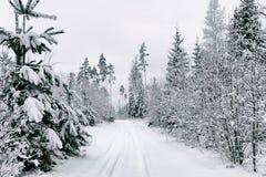 Strada della neve nella foresta nell'inverno in Russia Fotografia Stock Libera da Diritti