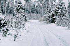 Strada della neve nella foresta nell'inverno in Russia Fotografie Stock