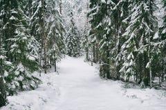 Strada della neve nella foresta nell'inverno in Russia Fotografia Stock