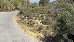 Strada della palma in montagne stock footage