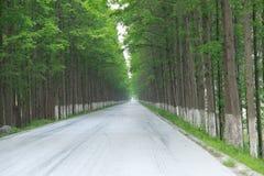 Strada della primavera Fogliame, verde fotografia stock