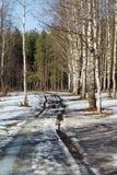 Strada della sorgente Fotografie Stock