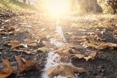Strada delle foglie di autunno Immagine Stock