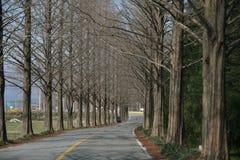 Strada delle vie di Metasekwaia Fotografia Stock