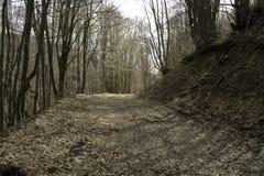 Strada densa dormiente degli alberi forestali Immagini Stock