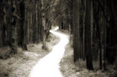 Strada dentro alla foresta Fotografia Stock Libera da Diritti