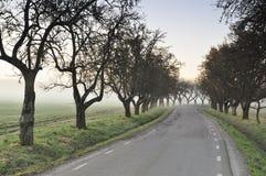Strada dentro alla nebbia Immagini Stock Libere da Diritti