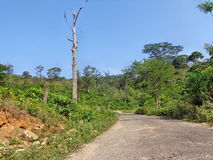 Strada dentro la foresta Fotografie Stock Libere da Diritti