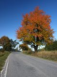 Strada di autunno fotografia stock