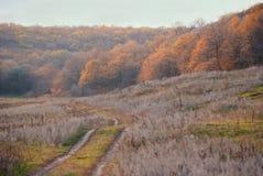 Strada di autunno attraverso i prati alla foresta Immagine Stock Libera da Diritti