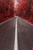 Strada di autunno attraverso la foresta Immagini Stock Libere da Diritti