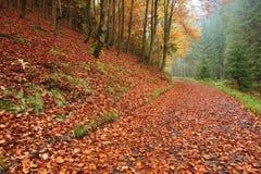 Strada di autunno con le foglie Fotografia Stock Libera da Diritti