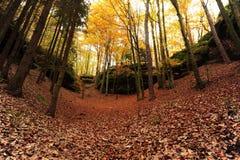 Strada di autunno con le foglie Immagini Stock Libere da Diritti