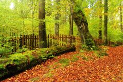 Strada di autunno con le foglie Immagine Stock Libera da Diritti
