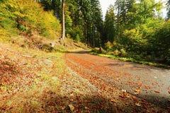 Strada di autunno con le foglie Immagine Stock