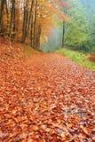 Strada di autunno con le foglie Immagini Stock