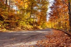Strada di autunno con le foglie arrugginite cadute Fotografia Stock Libera da Diritti