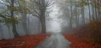 Strada di autunno dell'asfalto fotografia stock