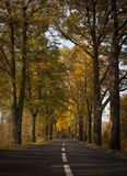 Strada di autunno - foresta Fotografia Stock Libera da Diritti