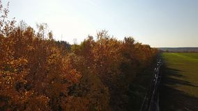 Strada di autunno nel campo con gli alberi gialli stock footage